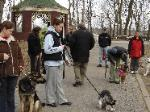 Free Dog Training Lessons at Doggie boot camp - Bayside - Queens NY