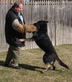 Dog training - Protection training