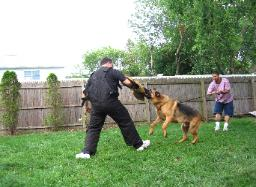 New York Protection Training - Tyson
